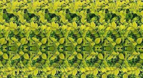 你能看出什麼嗎?