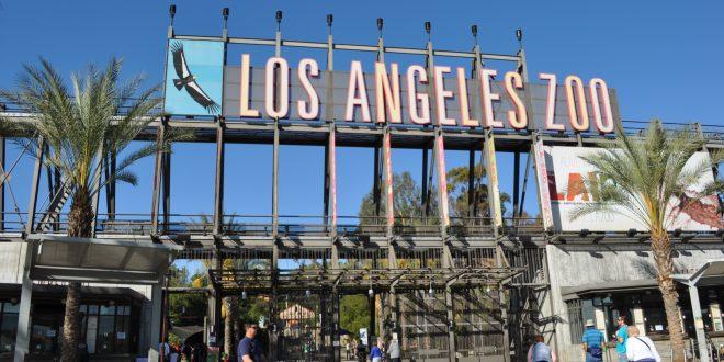 洛杉磯動物園50週年紀念
